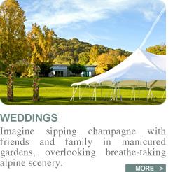 weddings-new